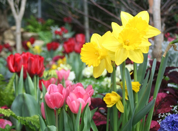 Garden-Center-Images/Annuals-Bulbs1.jpg